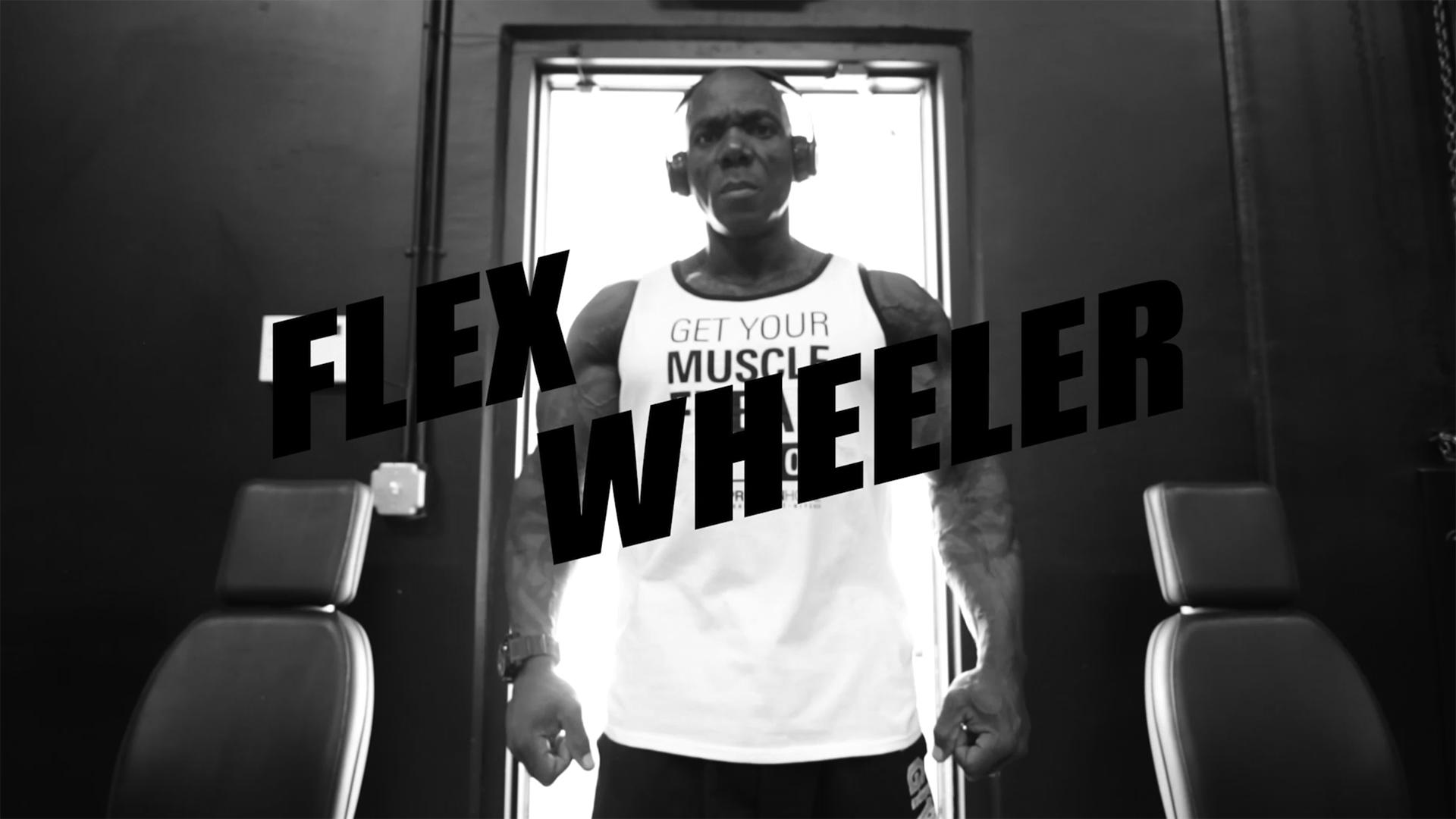 Flex Wheeler for Protein House - HAFEY DIGITAL